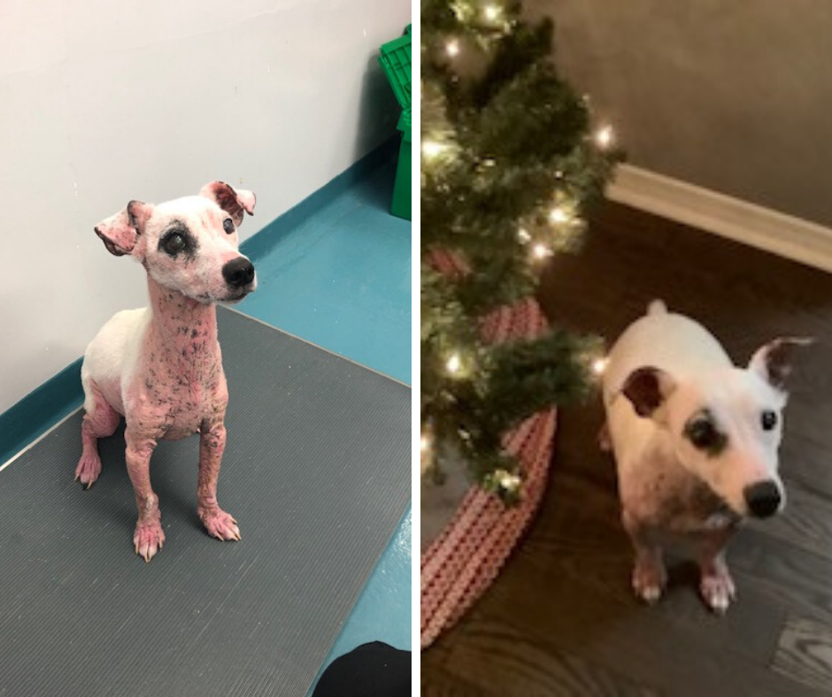 Milo's journey to recovery: he's ready for a forever home!