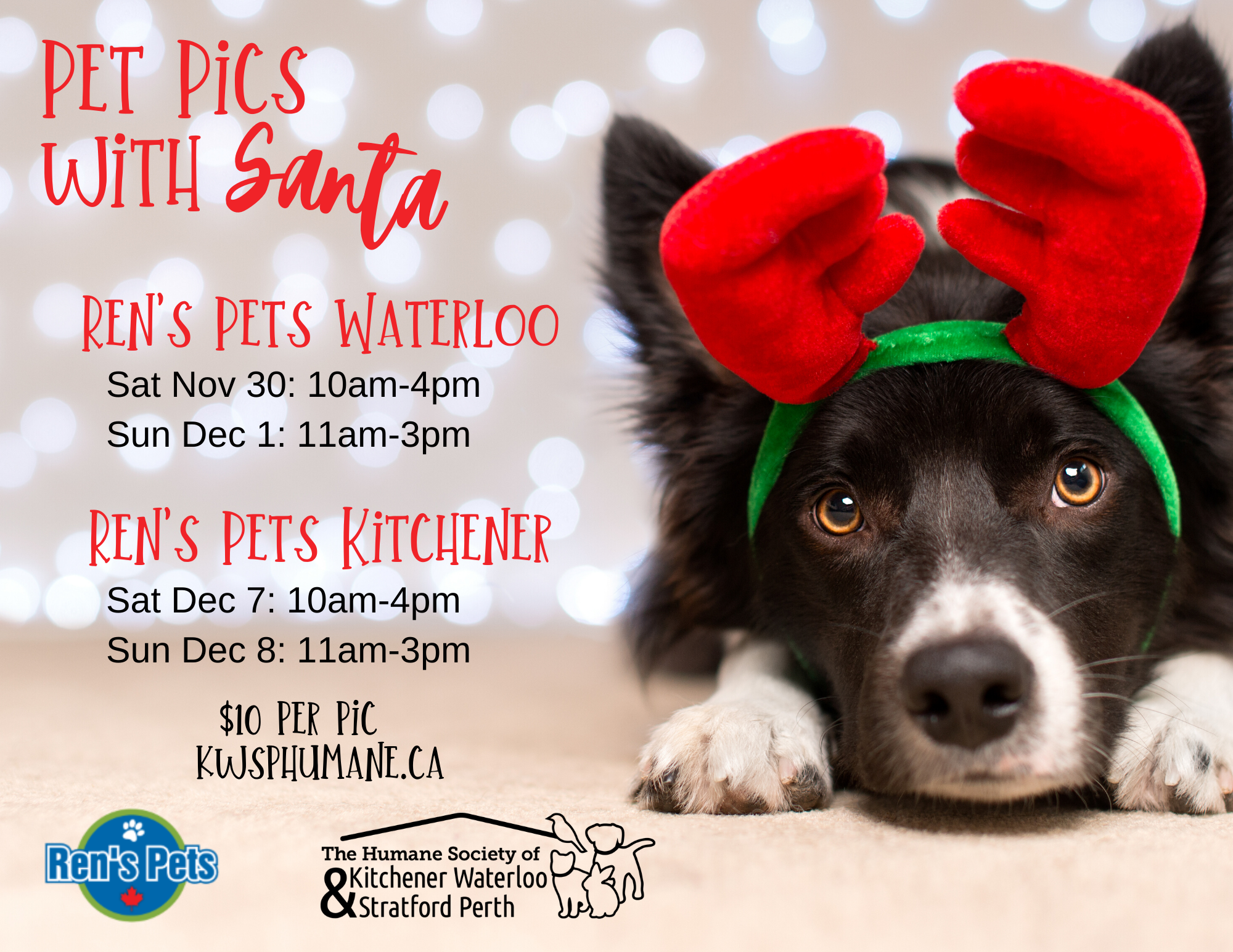 Pet Pics with Santa at Ren's Pets Kitchener
